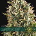 Super Skunk (Vision Seeds)