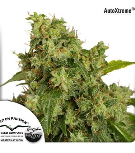AutoXtreme (Dutch Passion)