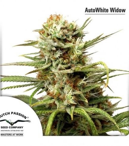 AutoWhite Widow (Dutch Passion)