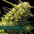 Critical Impact (Vision Seeds)