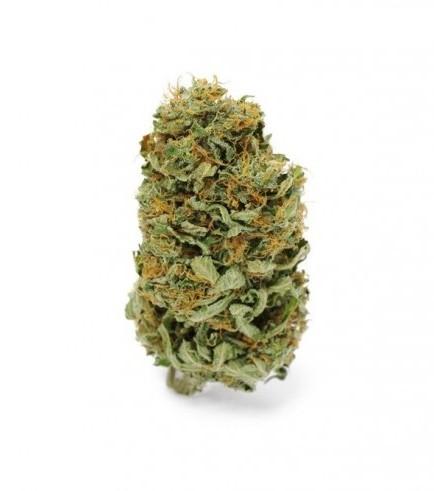 Amnesia Haze (Zamnesia Seeds)