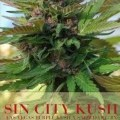 Sin City Kush (Alphakronik Genes)