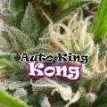 Auto King Kong (Dr. Underground)