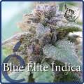 Blue Elite Indica (Elite Seeds)