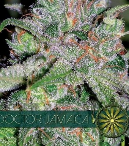Doctor Jamaica (Vision Seeds)