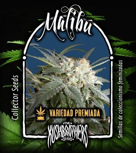 Malibú (KushBrothers)