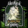 MassKush (KushBrothers)