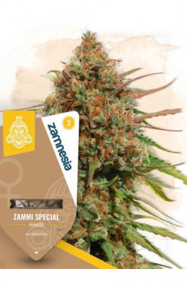 Zammi Special