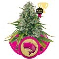 Royal Moby (Royal Queen Seeds)