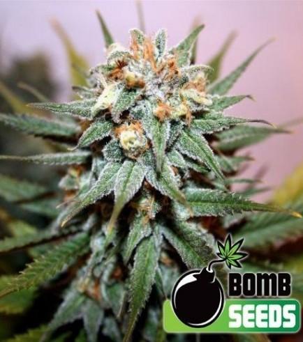 Hash Bomb (Bomb Seeds)