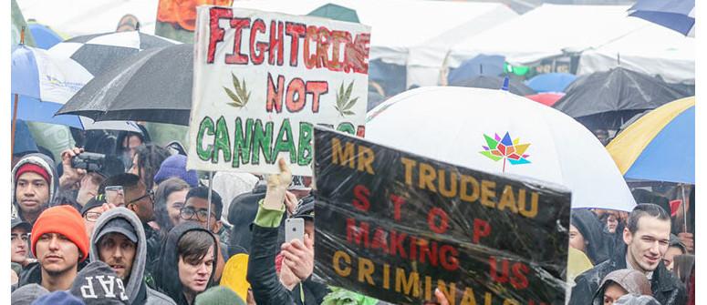 Cannabislegalisierung in Kanada: Zusammenfassung des ersten Jahres