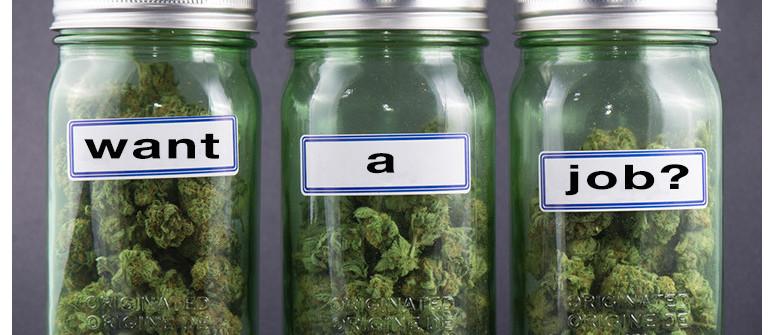 Marihuana Karrieren: Wie Man Zu Einem Budtender Wird