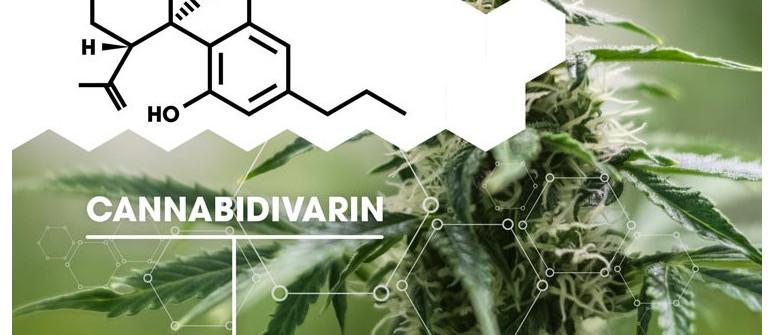 Was Ist Cannabidivarin (CBDV)?