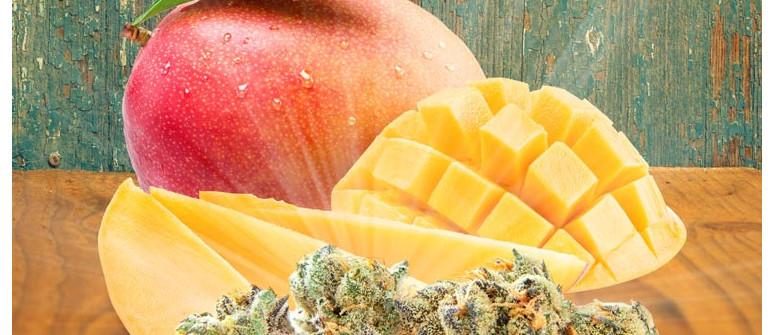 Du Willst Dein High Verbessern? Iss Eine Mango!