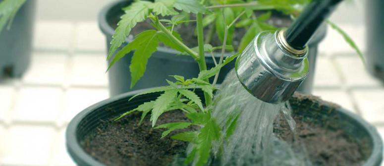 Alles Über Ebbe-Flut-Systeme für den Cannabisanbau
