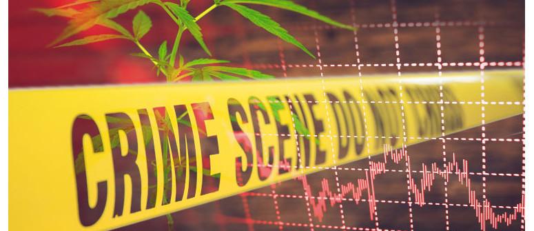 Senkt die Legalisierung von Cannabis die Kriminalitätsrate?