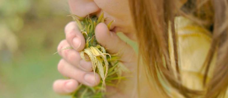 Cannabis Terpene: Alles was Du Wissen musst