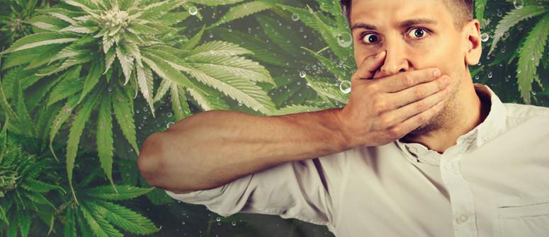 Kann Cannabis Schluckauf heilen?