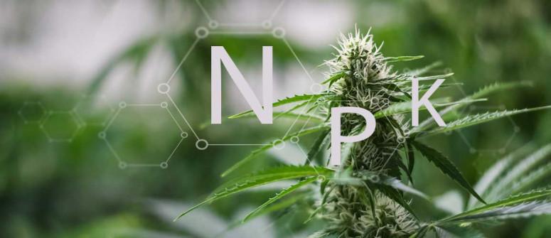 Den NPK-Wert und seine Bedeutung für den Anbau von Cannabis verstehen