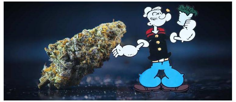 Popeye war ein Pothead