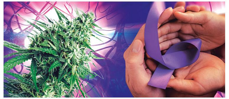 Heute ist Purple Day: ein internationaler Tag des Bewusstseins für Epilepsie
