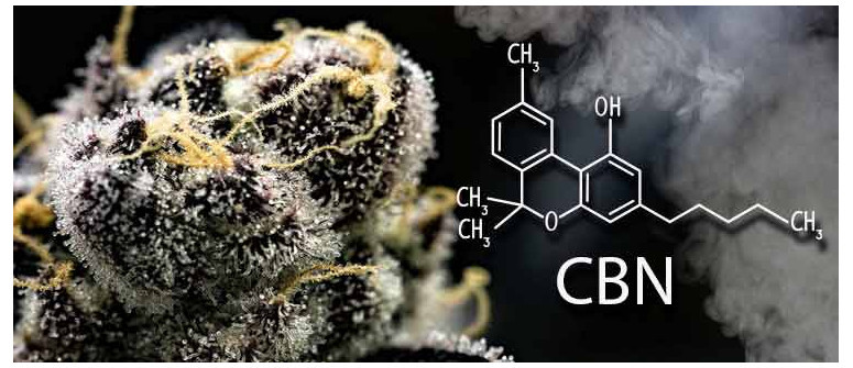 Was ist CBN (Cannabinol)?