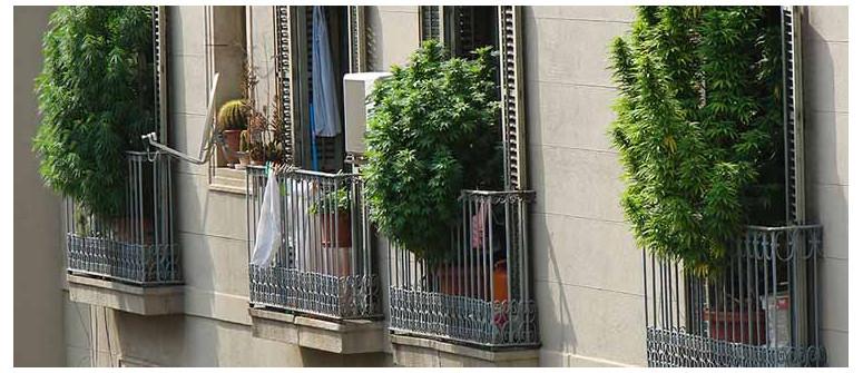7 Tipps für den Anbau von Gras auf Deinem Balkon oder Deiner Terrasse