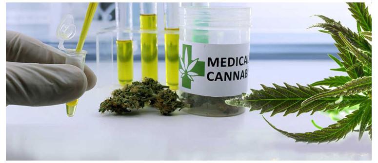 10 Möglichkeiten, wie Cannabis bei Krebs helfen kann
