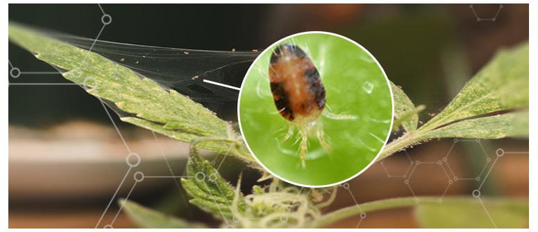 Spinnmilben auf meinen Pflanzen. Was nun?