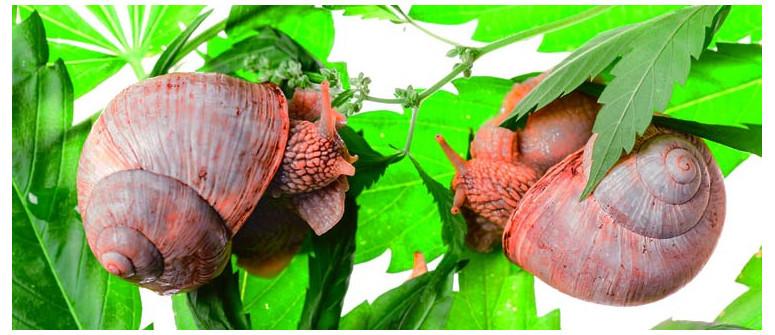 Wie Du Deine Pflanzen vor Schnecken beschützt
