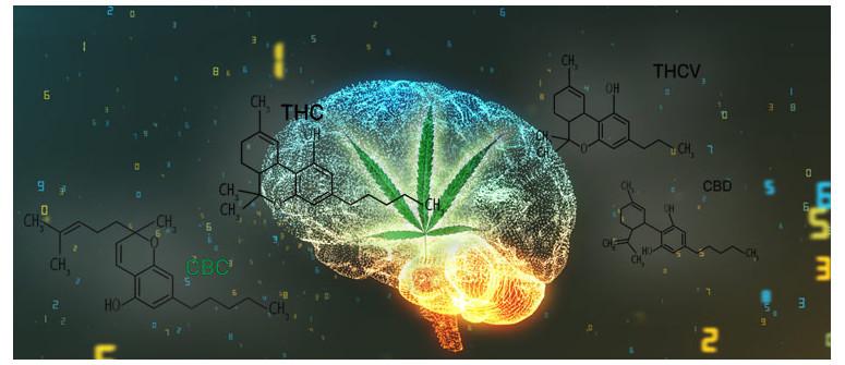Was ist klinischer Endocannabinoidmangel?
