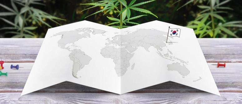 Der Rechtliche Status von Cannabis in Südkorea