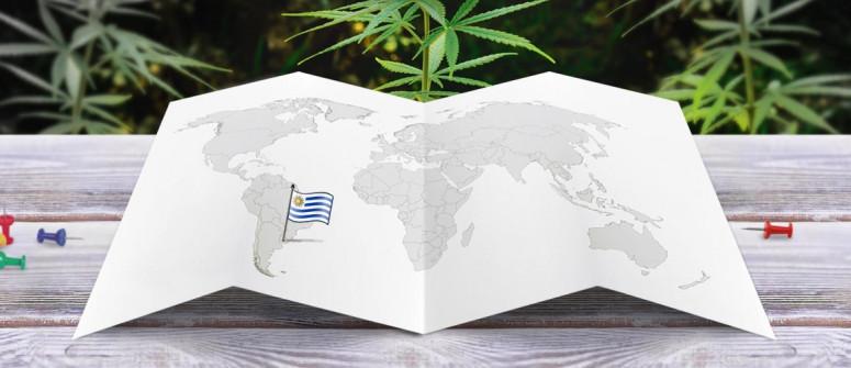 Der rechtliche Status von Cannabis in Uruguay