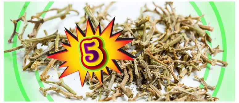 5 Gute Gründe die Stängel Deiner Cannabispflanzen nicht wegzuwerfen