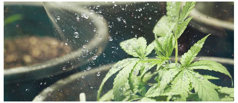 Wie und wann Du Deine Cannabispflanzen gießen solltest