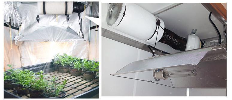 Geruchskontrolle beim Anbau von Cannabis im Growzelt