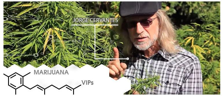 Marihuana-VIP: Jorge Cervantes