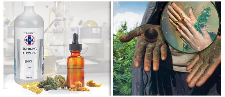Cannabis-Konzentrate: Was ist der Unterschied zwischen Extrakten ohne und mit Lösungsmitteln?