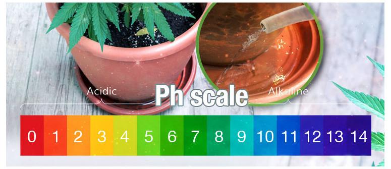 Der beste pH-Wert für Cannabispflanzen