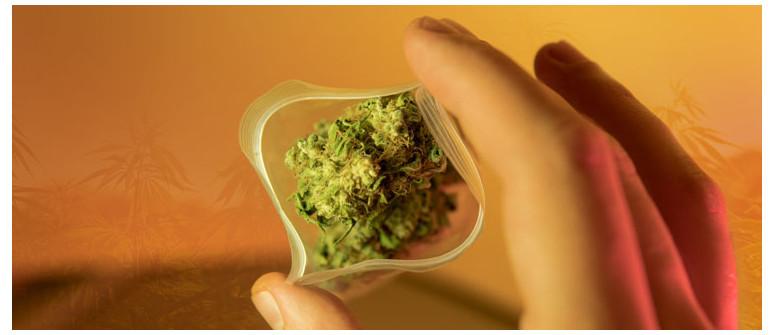 10 Tipps für Nutzer, die erstmals Cannabis konsumieren
