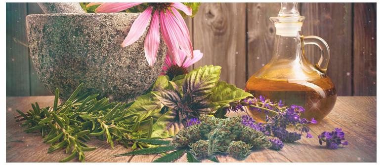 Kräuter für die Kombination mit Cannabis