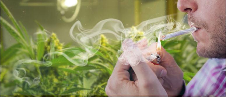 Stört es Cannabispflanzen, wenn man in ihrer Nähe raucht?