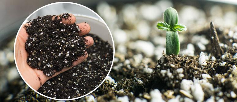Wie Du Deinen eigenen Dünger für Cannabispflanzen herstellst