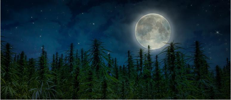 Mondgärtnern und Cannabis: Den Mond für einen besseren Anbau nutzen