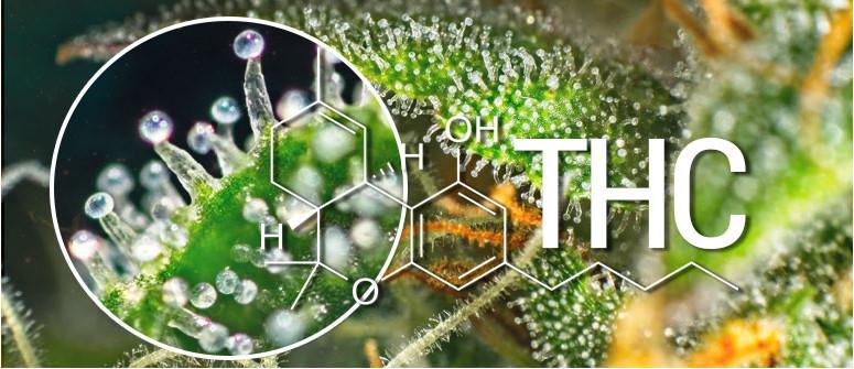 Was Ist THC (Delta-9-tetrahydrocannabinol)?