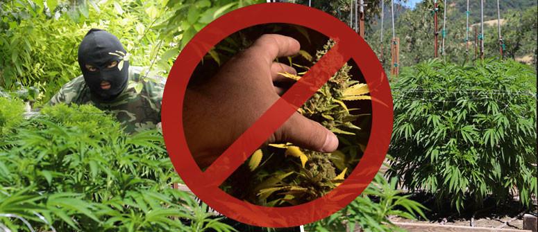 4 Tipps, wie Du Deinen Cannabisgarten vor Dieben schützt