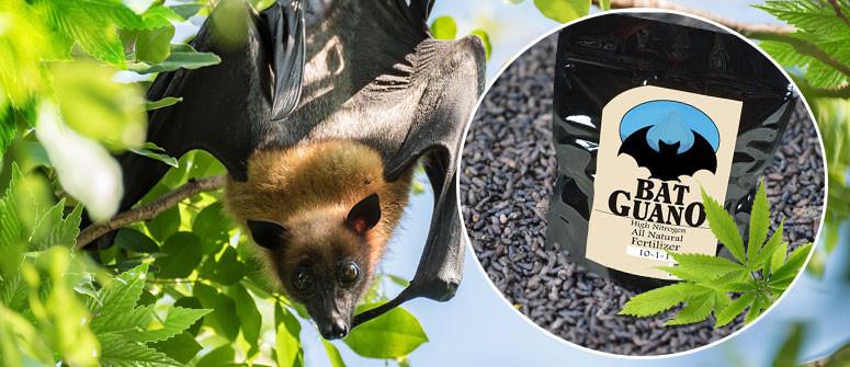 Der Anbau von Cannabis mit Fledermaus-Guano