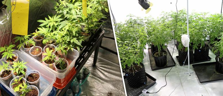 Wie man den perfekten Grow Room für Cannabis einrichtet