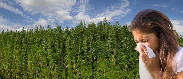 Kann man auf Cannabis allergisch reagieren? Ursachen Und Symptome
