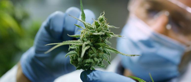 Was sind Cannabinoide und woher kommen sie?